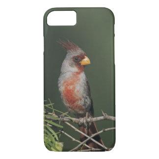 Pyrrhuloxia, Cardinalis sinuatus, male, Starr iPhone 8/7 Case