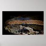Python bivittatus plakatdrucke