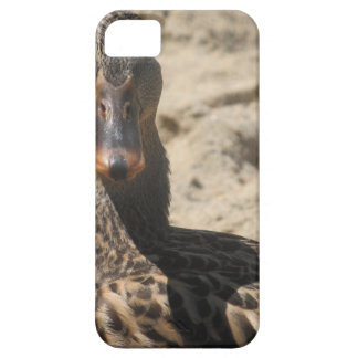 Quack duck iPhone 5 covers
