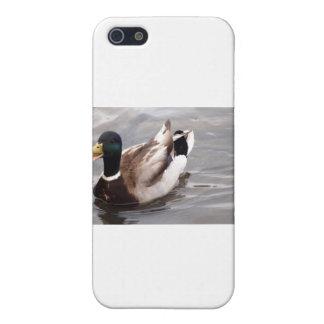 Quack iPhone 5 Cases