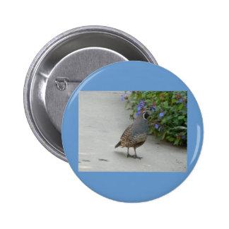 quail pin