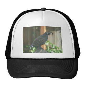 quail mesh hat