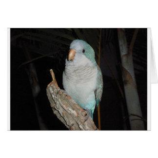 quaker parrot card