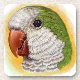 Quaker parrot realistic painting coaster