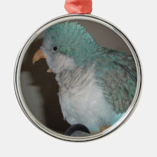 quaker parrot Silver-Colored round decoration