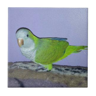 Quaker Parrot Tile