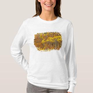 Quaking aspen grove in peak autumn color in 2 T-Shirt