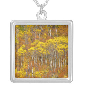 Quaking aspen grove in peak autumn color in silver plated necklace