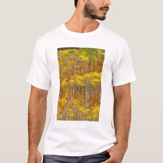 Quaking aspen grove in peak autumn color in T-Shirt