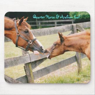 Quarter horse & Arabian foal Mousepad
