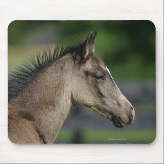 Quarter Horse Foal Headshot Mouse Mat