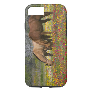 Quarter Horse in field of wildflowers near Cuero iPhone 8/7 Case