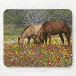 Quarter Horse in field of wildflowers near Cuero Mouse Mat
