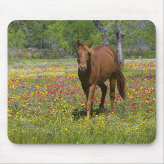 Quarter Horse in field of wildflowers near Mouse Mat