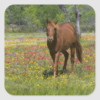 Quarter Horse in field of wildflowers near Square Sticker