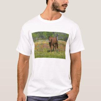 Quarter Horse in field of wildflowers near T-Shirt