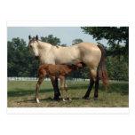 Quarter Horse Mare & Foal Postcard