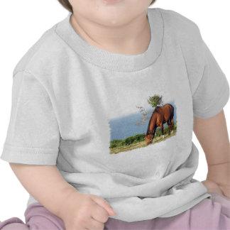 Quarter Horse Photo Baby T-Shirt