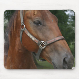 Quarter Horse Photo Mouse Pad