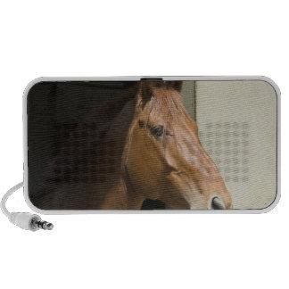 Quarter Horse Speakers