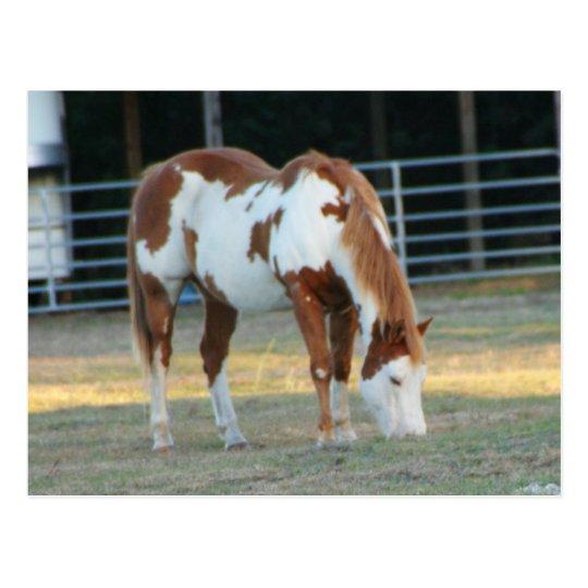Quarterhorse 3 postcard