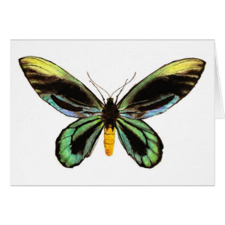 Queen Alexandra's Birdwing Card
