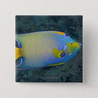 Queen Angelfish 15 Cm Square Badge