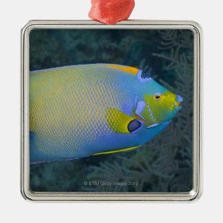 Queen Angelfish Christmas Ornament