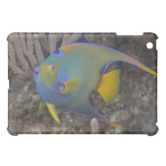 Queen Angelfish (Holacanthus ciliaris) swimming Cover For The iPad Mini