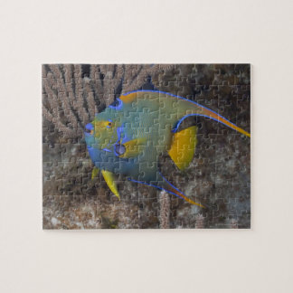 Queen Angelfish (Holacanthus ciliaris) swimming Jigsaw Puzzle