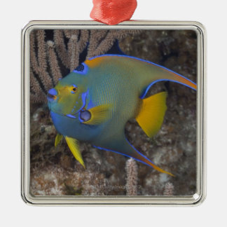 Queen Angelfish (Holacanthus ciliaris) swimming Silver-Colored Square Decoration