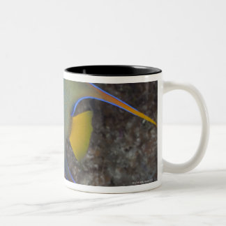 Queen Angelfish (Holacanthus ciliaris) swimming Two-Tone Coffee Mug