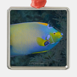 Queen Angelfish Silver-Colored Square Decoration