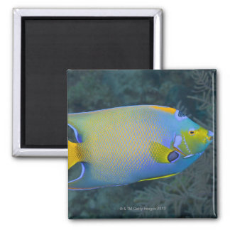 Queen Angelfish Square Magnet