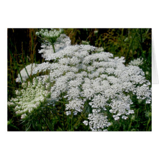 Queen Anne s Lace Note Card