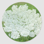 Queen Annes Lace Classic Round Sticker