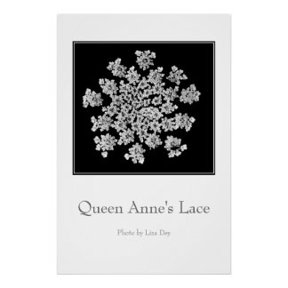 'Queen Anne's Lace' Poster