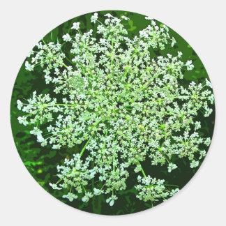 Queen Anne's Lace Round Sticker