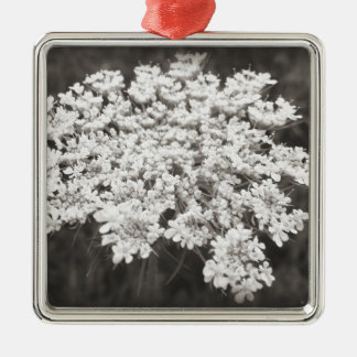 Queen Anne's Lace Silver-Colored Square Decoration