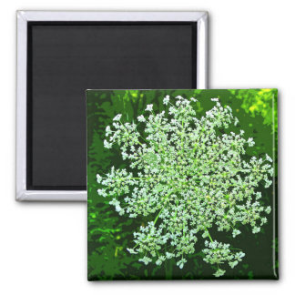 Queen Anne's Lace Square Magnet