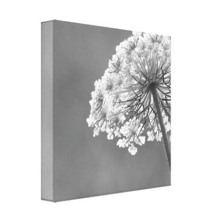 Queen Anne's Lace (Wild Carrot) Stretched Canvas Prints