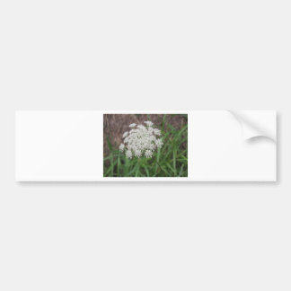 Queen Anne's Lace Wildflower Bumper Sticker