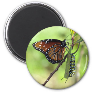 Queen Butterfly and Monarch Caterpillar 6 Cm Round Magnet