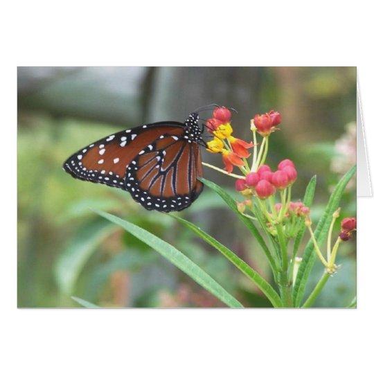 Queen Butterfly Notecard