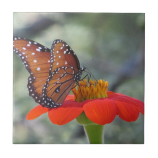 Queen Butterfly on Mexican Sunflower Tile