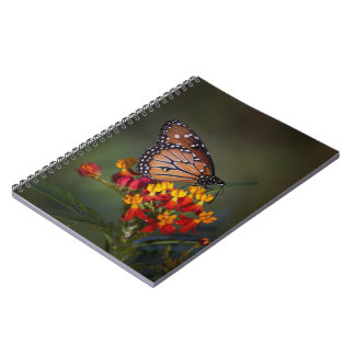 Queen butterfly on tropical milkweed note book
