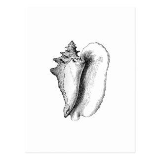 Queen Conch (line art) Postcard