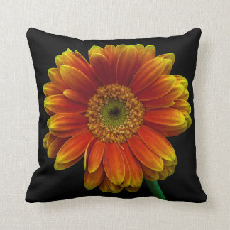 Queen of the daisies cushion