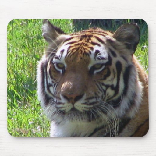 Queen of the Jungle Mouse Pad