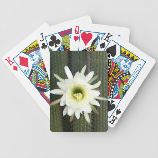 Queen Of The Night Cactus Flower, Karoo Region Bicycle Playing Cards